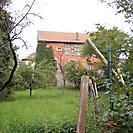 Ochsenscheuer